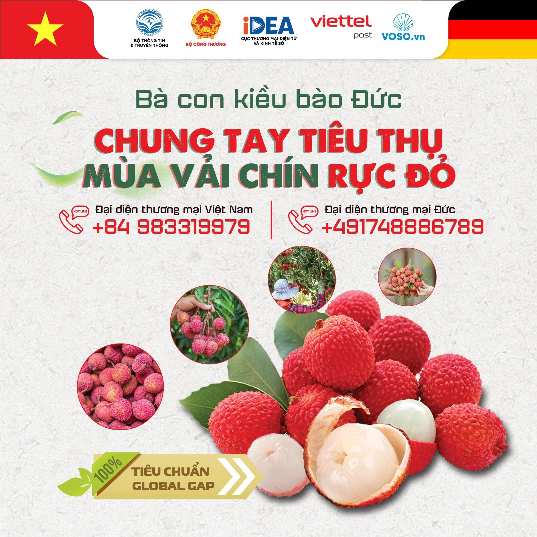 Bac Giang lychees, exported, European market, Bac Giang province, local customers, E-commerce platfrom, Voso, Viettel Post, GlobalGAP procedure