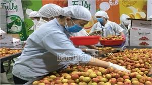 Bắc Giang: Xuất khẩu vải thiều sang châu Âu