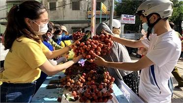 Quảng Ngãi hỗ trợ tiêu thụ vải thiều Bắc Giang