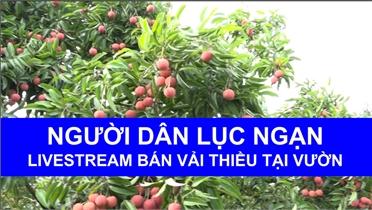 Người dân Lục Ngạn Livestream bán vải thiều tại vườn