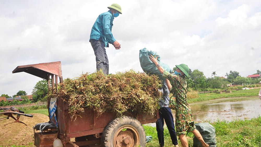 Bắc Giang, Bộ CHQS tỉnh, Bộ đội giúp nhân dân thu hoạch nông sản