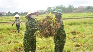 Bắc Giang: Bộ đội giúp dân thu hoạch nông sản