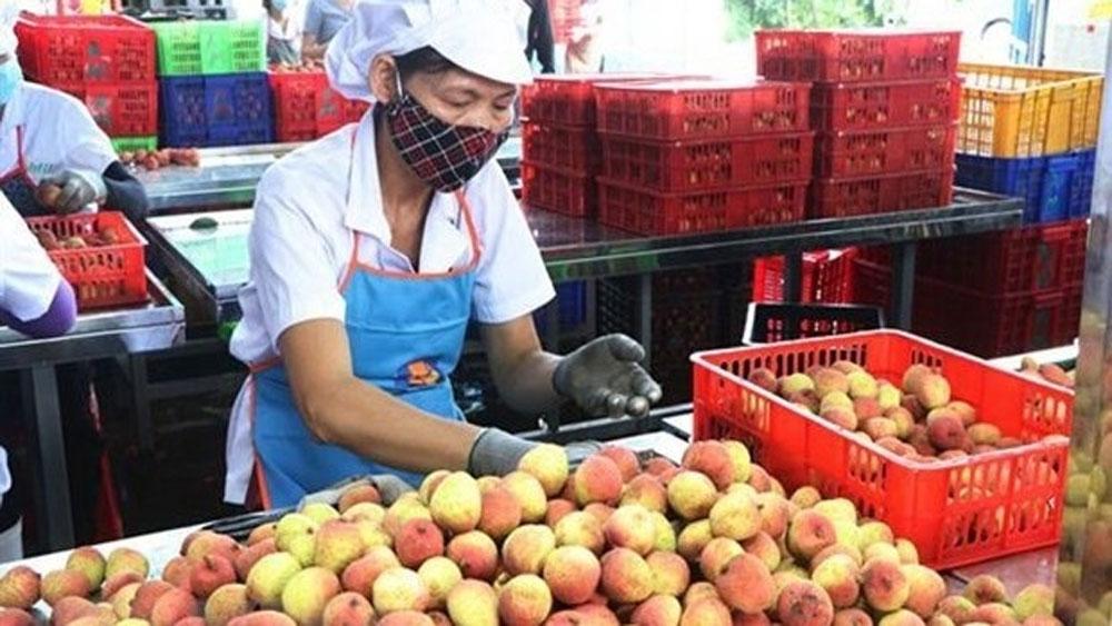 Vietnam, farm produce exports, export to China, Agricultural exports, impressive growth, export markets, plant quarantine solutions