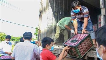Cần Thơ kết nối tiêu thụ 240 tấn vải thiều Bắc Giang