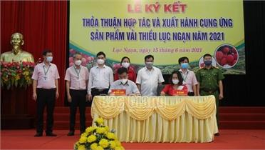 Ngân hàng Chính sách xã hội tỉnh Bắc Giang hỗ trợ Lục Ngạn tiêu thụ vải thiều