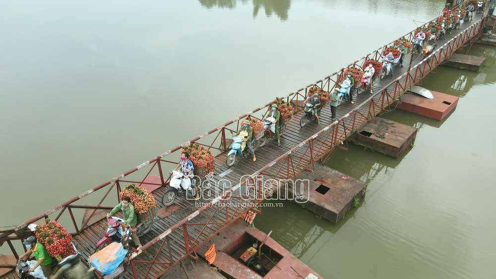 Người dân xã Tân Lập chở vải qua cầu phao. Ảnh: Hoàng Anh