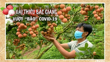 """Vải thiều Bắc Giang vượt """"bão"""" Covid - 19"""