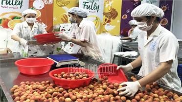 Bắc Giang: Tiêu thụ hơn 132 nghìn tấn vải thiều, giá bán 12.000- 30.000đ/kg