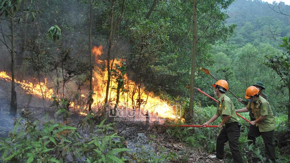 Bắc Giang, cháy rừng, kiểm lâm