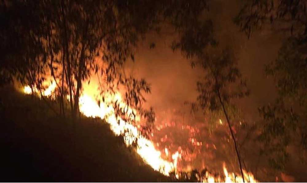 cháy rừng, kiểm lâm, lâm nghiệp, cảnh báo cháy rừng