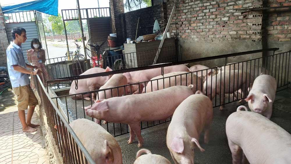 TP Bắc Giang: Chăn nuôi lợn trong khu dân cư gây ô nhiễm môi trường