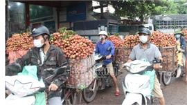 Bắc Giang: Tiêu thụ hơn 151 nghìn tấn vải thiều, đạt 80% sản lượng
