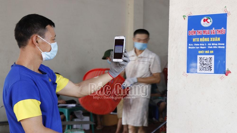 Bắc Giang: Hỗ trợ khai báo y tế thông minh tại hơn 240 điểm cân vải thiều Lục Ngạn