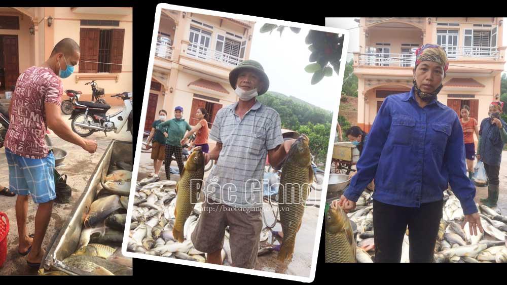 Bắc Giang: Nắng nóng, xuất hiện thủy sản bị chết