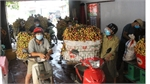 Bac Giang consumes over 151,000 tonnes of lychee, accounting for 80 percent of productivity