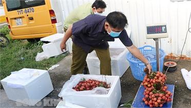 Bến Tre hỗ trợ tiêu thụ 106 tấn vải thiều Bắc Giang