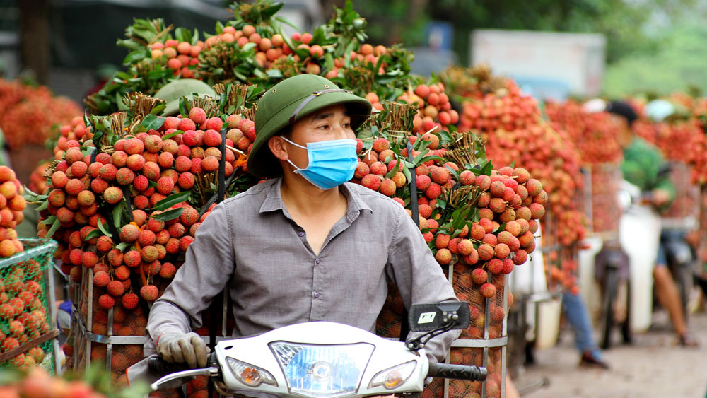 Vải thiều Lục Ngạn, Bắc Giang, bảo hộ chỉ dẫn địa lý,  an ninh, vải thiều, tiêu thụ,