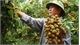 Online trade conference on Vietnamese longan slated for mid-July