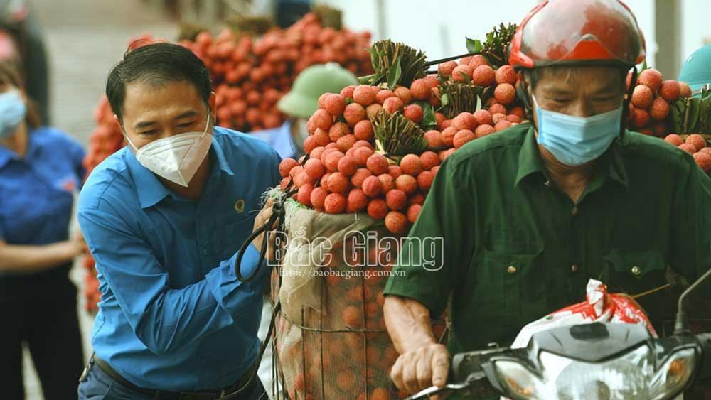 vải thiều Bắc Giang, hỗ trợ tiêu thụ, nền nông nghiệp minh bạch, vượt qua đại dịch