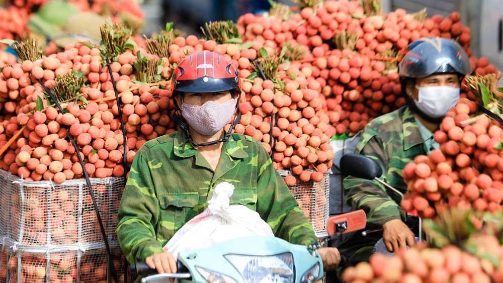 Báo Kinh tế và Đô thị , hỗ trợ, tiêu thụ, 5 tấn vải thiều Bắc Giang