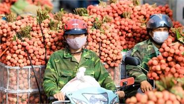 Báo Kinh tế và Đô thị hỗ trợ tiêu thụ hơn 5 tấn vải thiều Bắc Giang