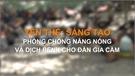 Yên Thế: Sáng tạo phòng, chống nắng nóng và dịch bệnh cho đàn gia cầm