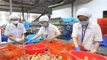 Thúc đẩy tiêu thụ nông sản qua kênh phân phối hiện đại