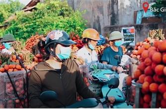 Mùa vải thiều vượt dịch của Bắc Giang