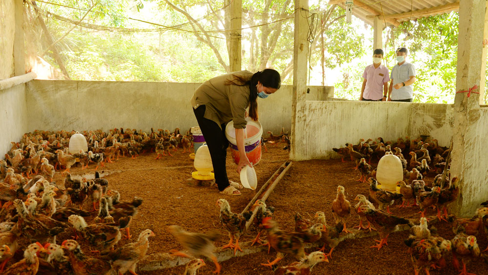 Bac Giang province, resumes agriculture production, Covid-19 pandemic,  agricultural sector, increased prices of materials