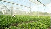 Nhân rộng mô hình nông nghiệp ứng dụng công nghệ cao: Tích tụ ruộng đất, liên kết theo chuỗi giá trị