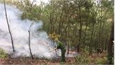 Việt Yên: Cháy 1,15 ha rừng