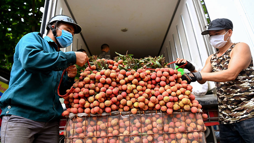 8,000 Vietnamese farmers, online sales, e-commerce platforms, digital economy, agriculture produce