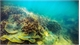 Scientists complete collection of sea creature specimens in southern Vietnam
