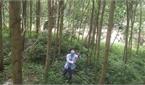 Công nghệ sản xuất giống nâng giá trị rừng kinh tế