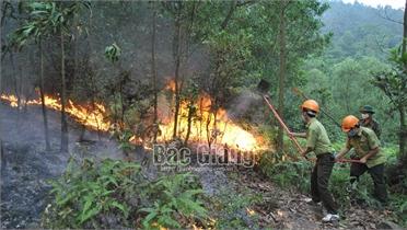 Bắc Giang: Đốt dọn thực bì gây cháy rừng, một phụ nữ bị khởi tố