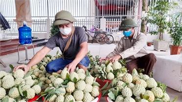 Bắc Giang: Gỡ khó khâu lưu thông tiêu thụ nông sản