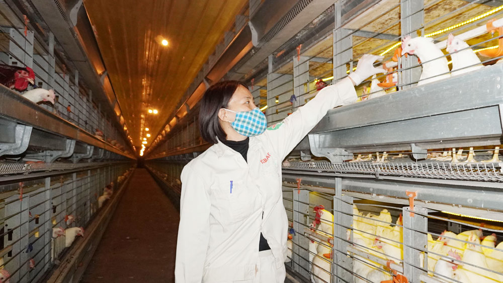 Bac Giang province, removes difficulties, sale of agricultural products, Covid-19 pandemic, consumption demand, Covid-19-free shipment