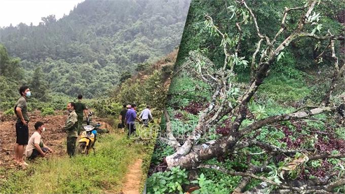 Vụ chặt phá gần 450 cây ăn quả tại xã Phú Nhuận: Người thuê đốn hạ là chủ hợp pháp