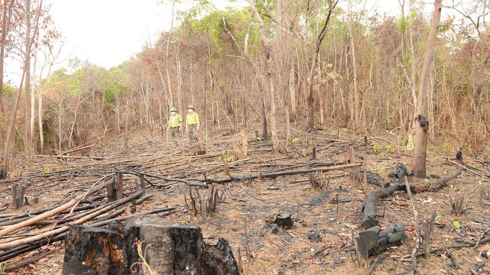 Bắc Giang, phát, phá rừng tự nhiên, xử lý vi phạm hành chính