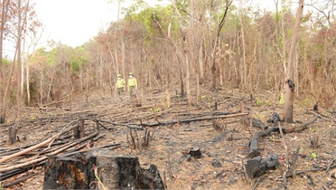 Quản lý, bảo vệ rừng: Khắc phục bất cập trong xử lý vi phạm