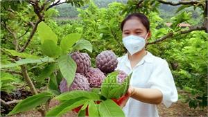 Bắc Giang: Na lạ, khách hàng săn đón