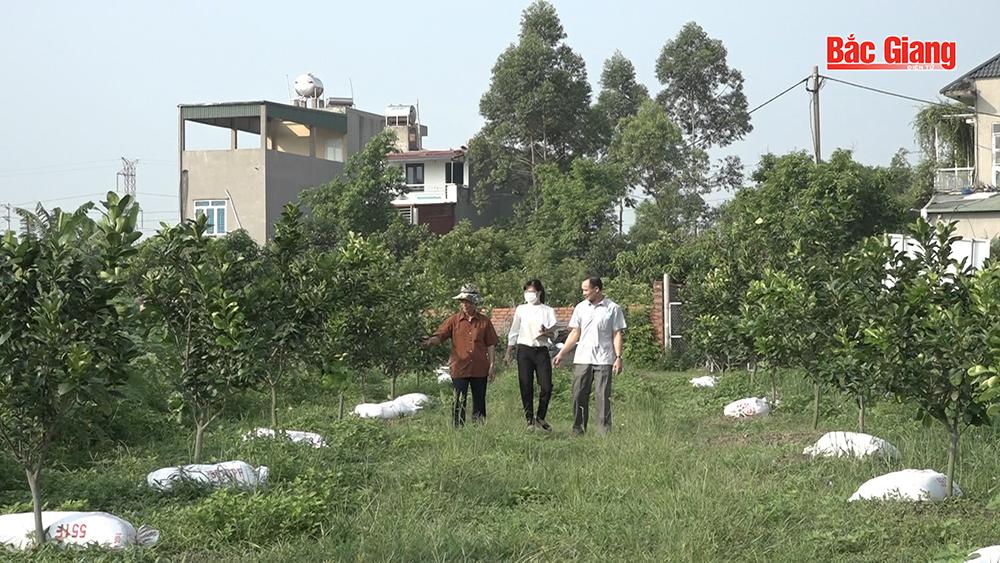 """""""Cải tạo vườn tạp"""" để phát triển bền vững"""