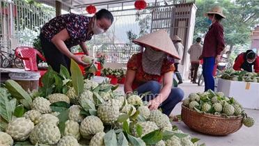Bắc Giang: Cấp thẻ ưu tiên cho phương tiện vận chuyển nông sản đi tiêu thụ