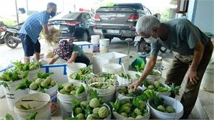 Bắc Giang: Nhiều nông sản tăng giá, tiêu thụ thuận lợi