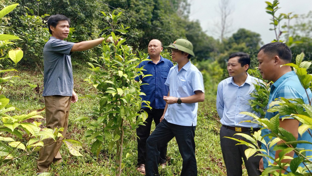 trà hoa vàng, lộc rừng, Bắc Giang, Sơn Động, mật ong rừng,