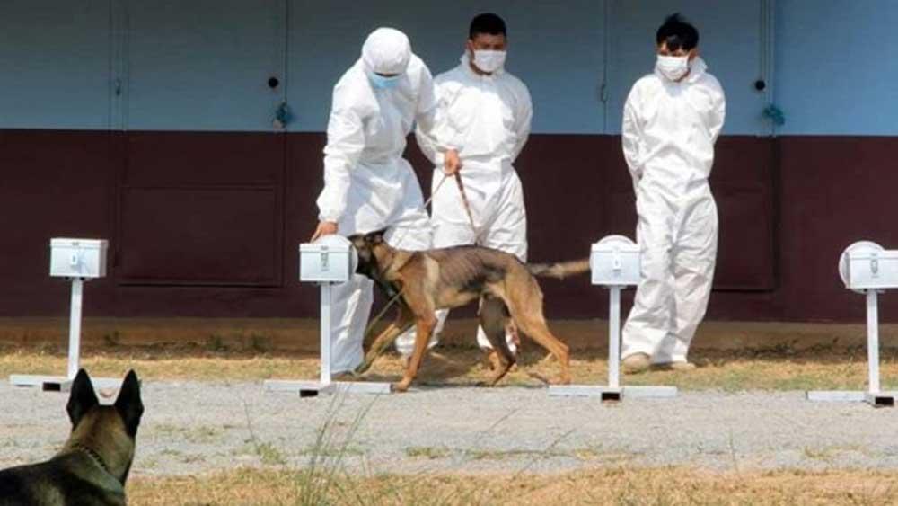 Campuchia, huấn luyện thành công, chó nghiệp vụ, phát hiện, người mắc Covid -19