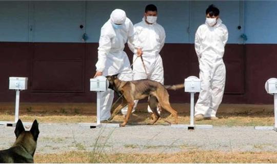 Campuchia huấn luyện thành công chó nghiệp vụ phát hiện người mắc Covid-19