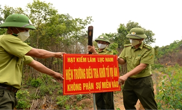 Tranh chấp đất rừng giữa người dân với các công ty lâm nghiệp: Cấp bách xử lý vi phạm