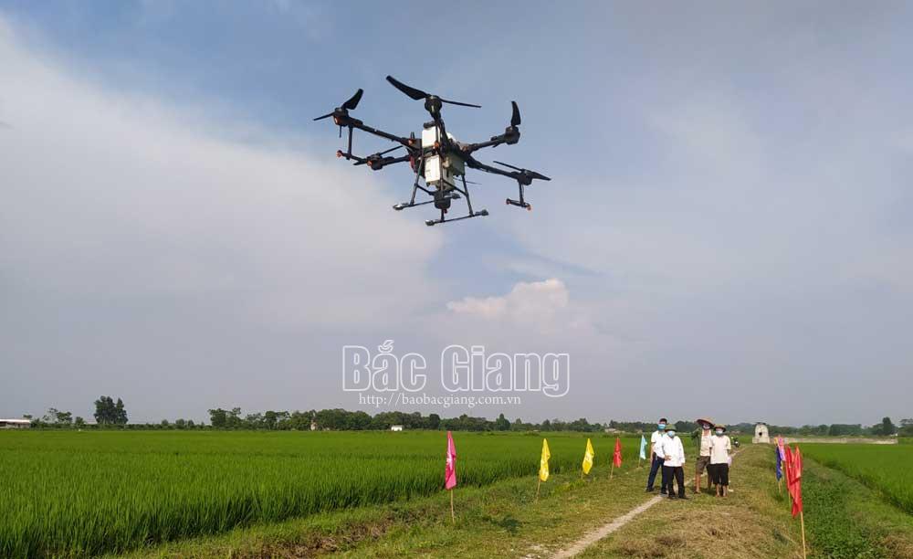 Tân Yên, phúc Sơn, Ngọc Châu, thiết bị bay, thiết bị bay không người lái, phun thuốc BVTV