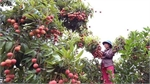 MoU signed to boost Vietnam-China fruit trading